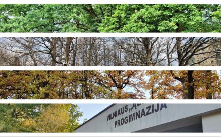 """Gamtinė istorija apie ąžuolus Vilniaus """"Ąžuolyno"""" progimnazijos teritorijoje"""